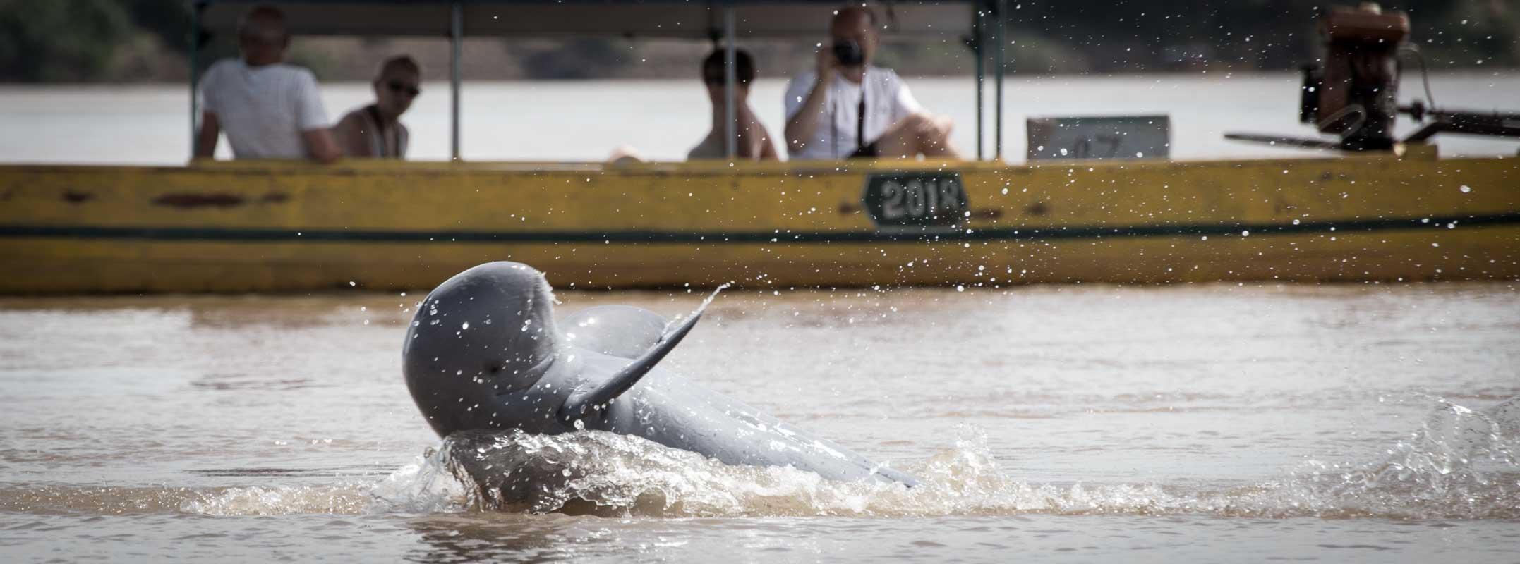 柬埔寨白江豚